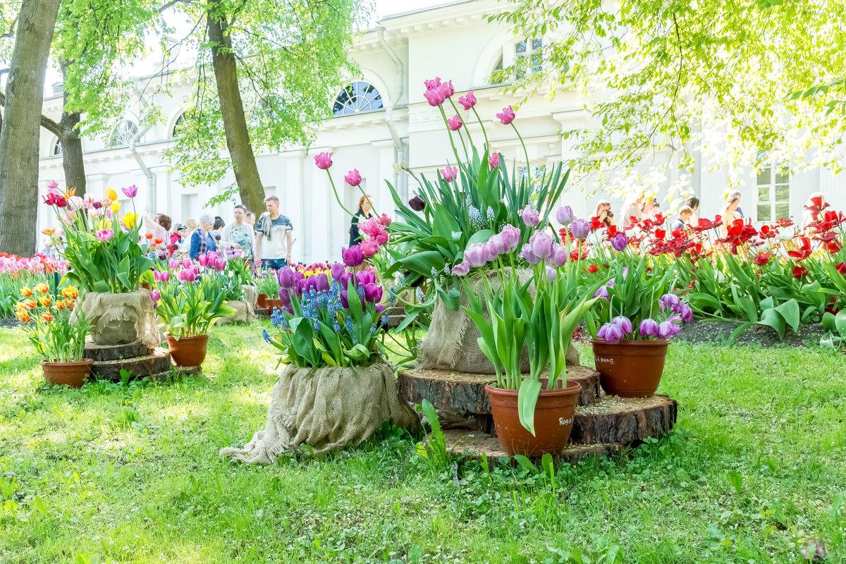 Фестиваль тюльпанов. - Виктор Орехов
