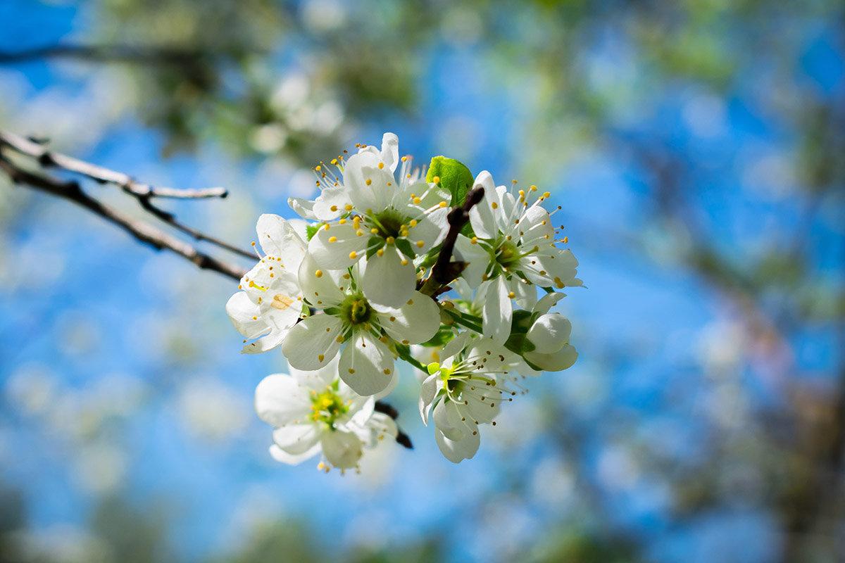 Весна - Роман никандров