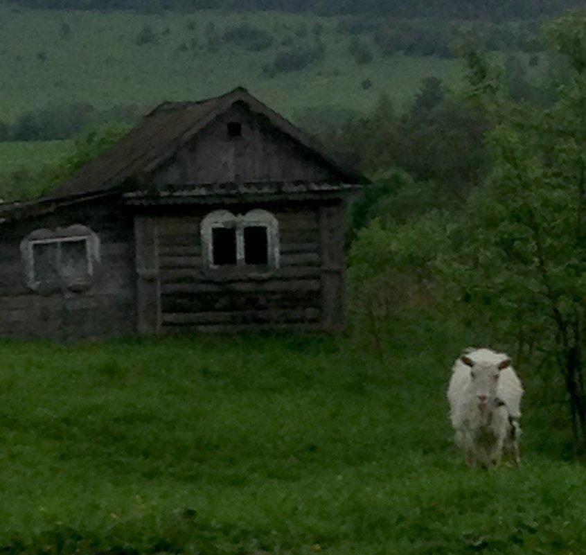 Старая банька и коза - Маруся Маруся