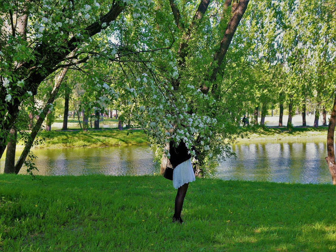 Яблоневый цвет... - Sergey Gordoff