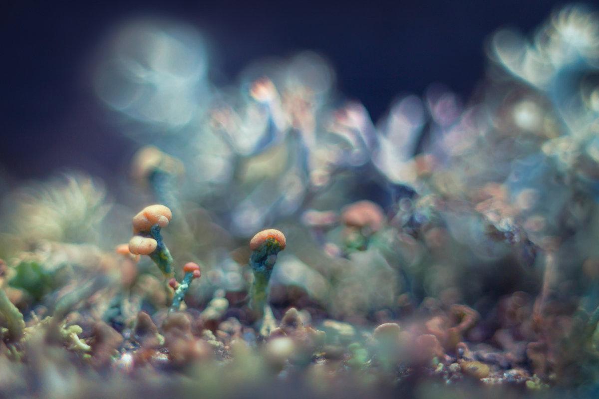 Lichenes - Алёна :)