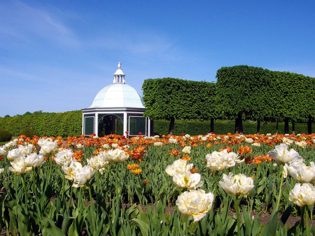 Цветение тюльпанов в Верхнем саду. - Лия ☼