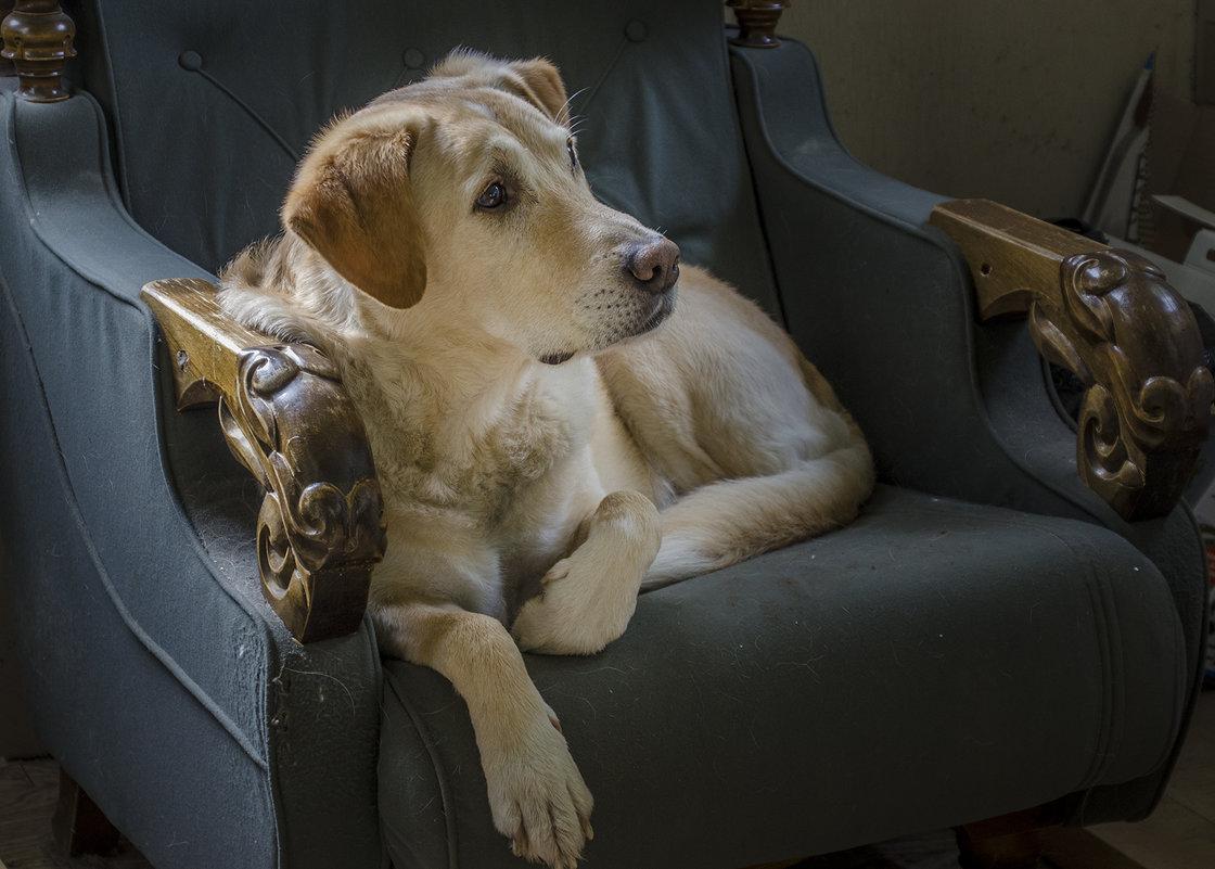Любимое кресло... - Ирина Шарапова