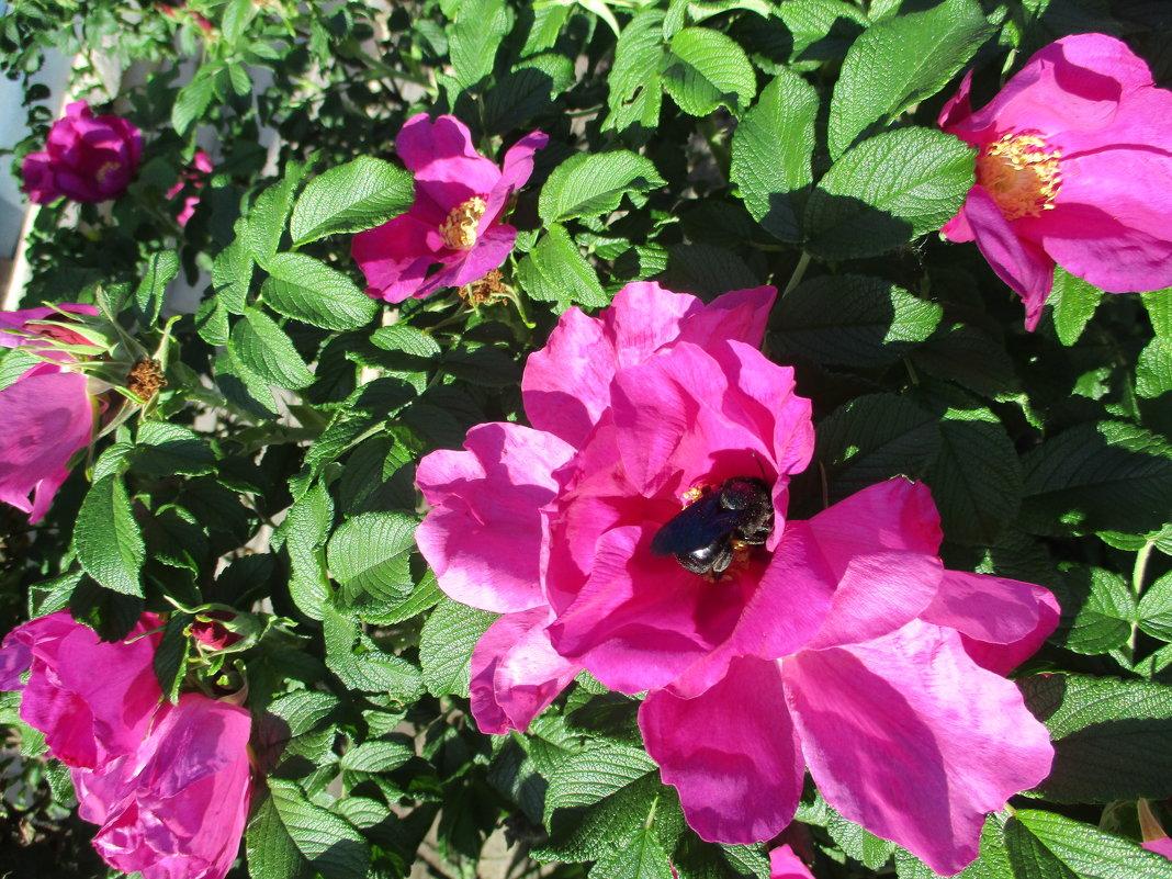 Обнаженная натура: секс розы и жука... - Алекс Аро Аро