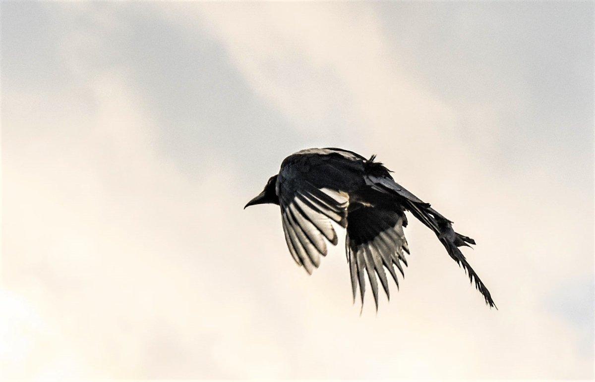 полетели. - petyxov петухов