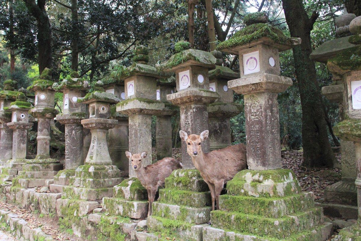 Япония. Нара. Святилище Касуга Тайся... - Виктория