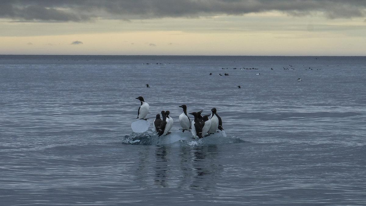 перегруженный айсберг, не доплывёт до берега .....