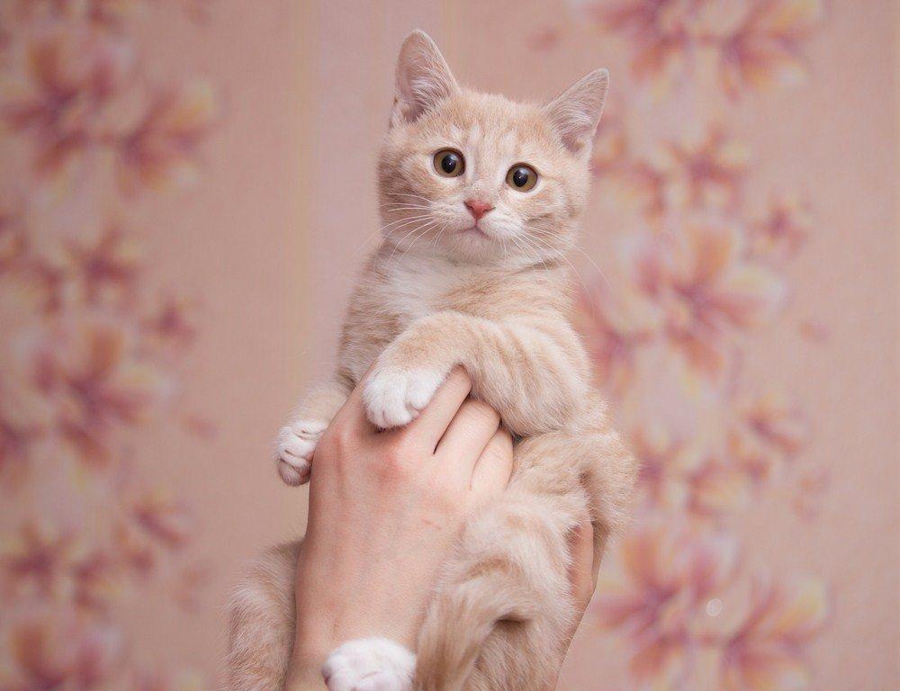 ЛАСКА, Центр помощи кошкам на Сахалине https://vk.com/laskasakhalin. Санек - Margarita Ласковая