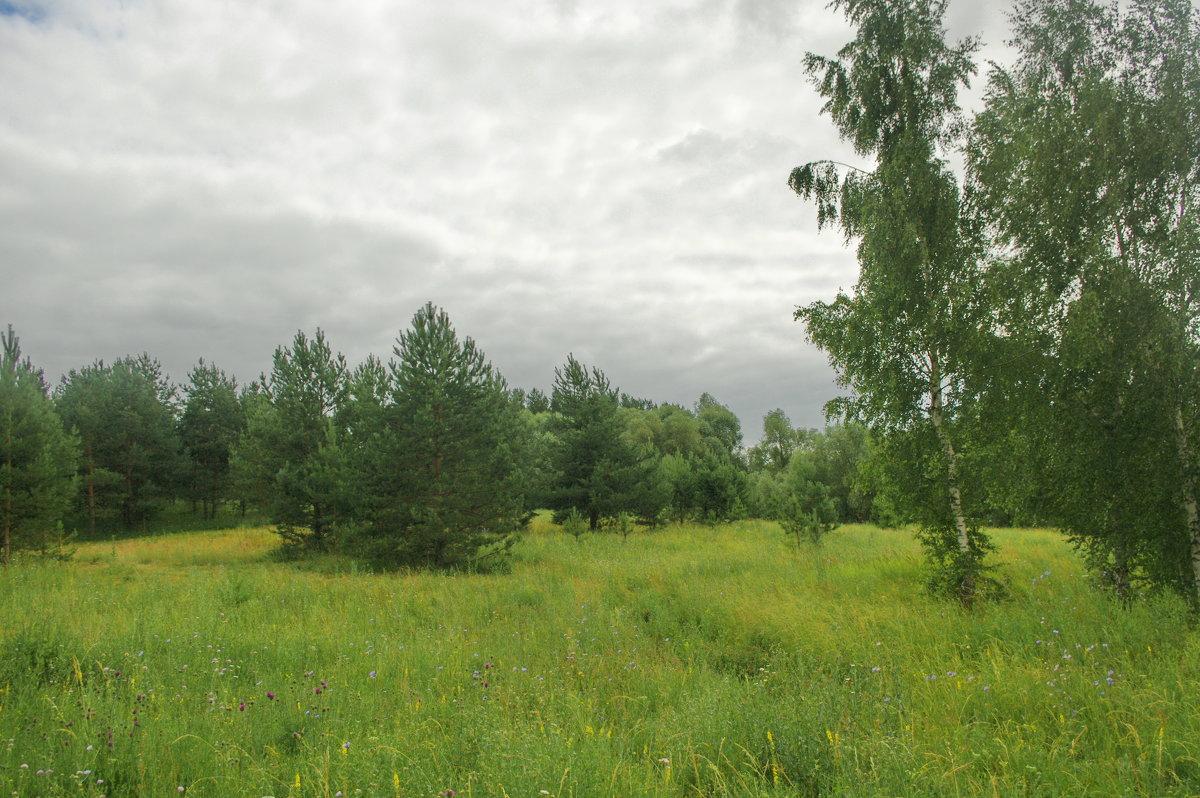 ..поля и рощи в пасмурный день.. - * vivat.b *