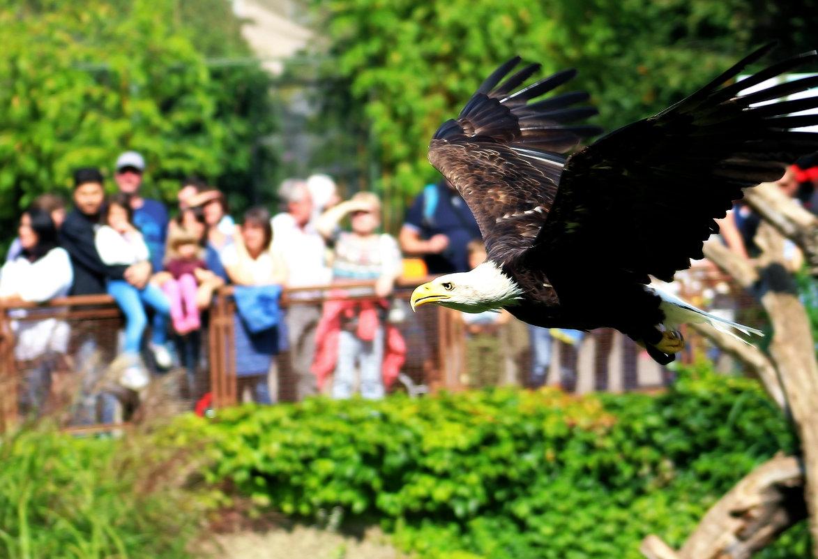 Полёт орла - Alexander Andronik