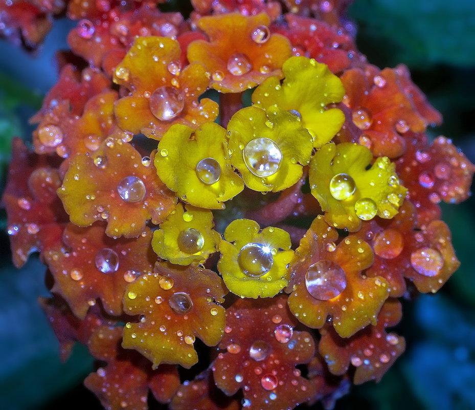 бриллианты на цветке - igor G.