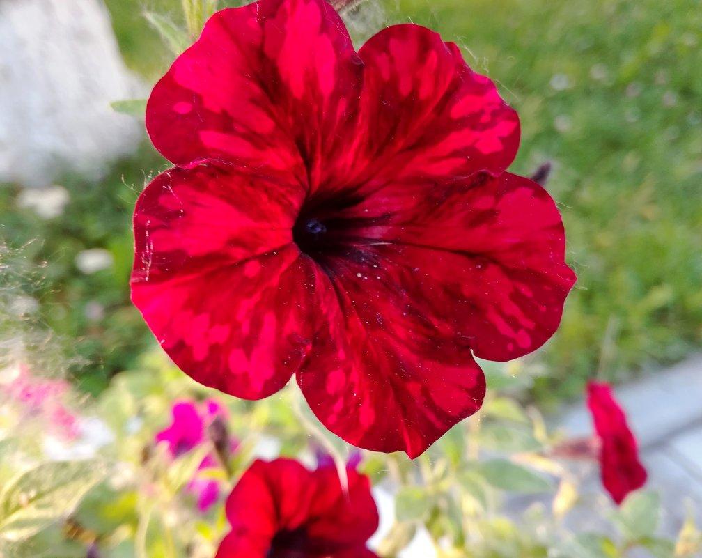 Цветочек аленький - Елена Викторова