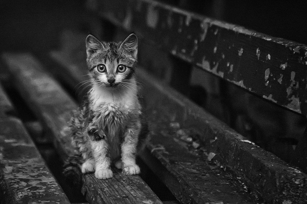 Бездомный малыш - Алексей Румянцев