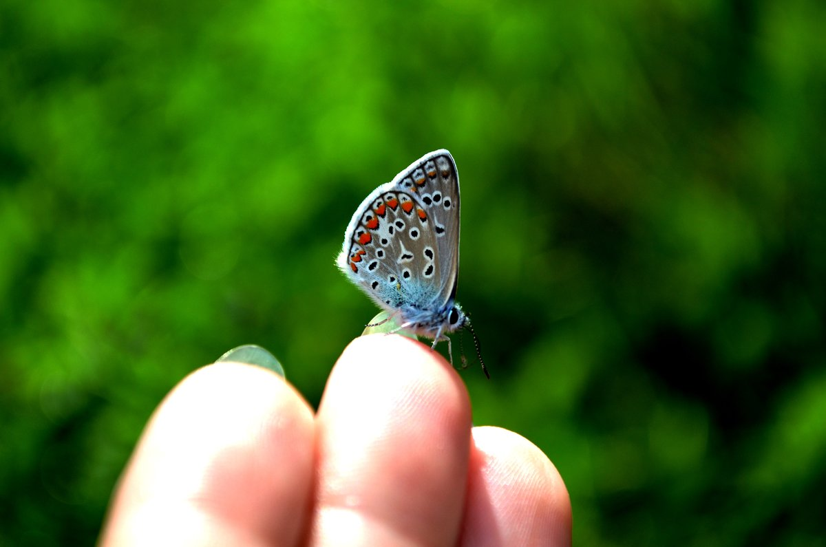бабочка - Svetlana Uryupina