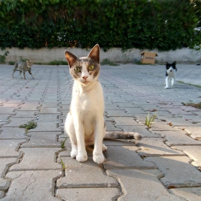 Турция. Местные обитатели улиц - Александр Павленко