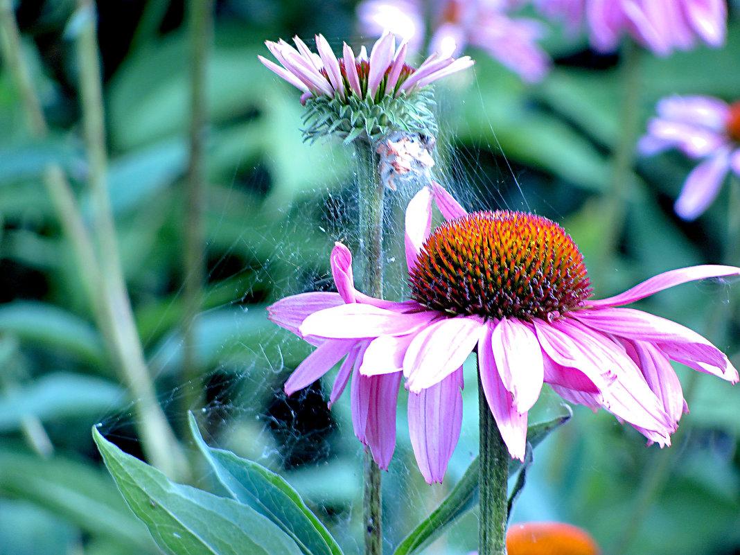 Городские цветы - Лидия Суюрова