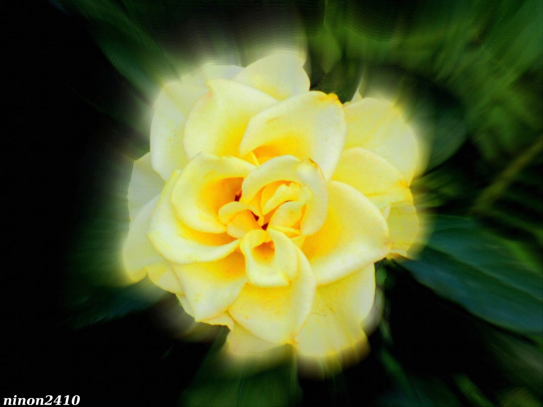 Жёлтая роза - Нина Бутко