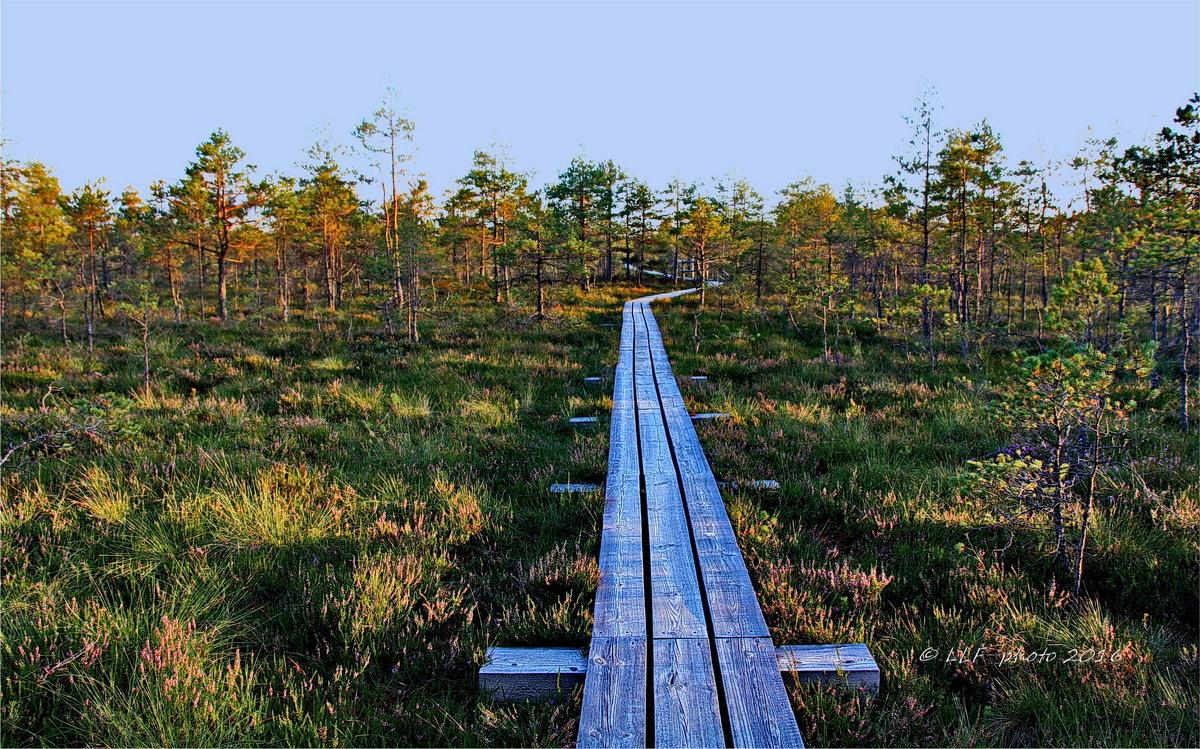 Национальный парк Кемери. Латвия. - Liudmila LLF