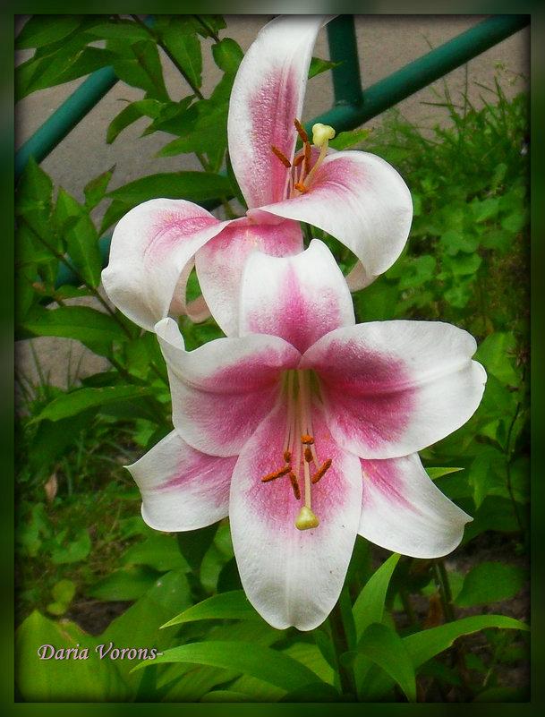 Розовая пара в белом - Daria Vorons