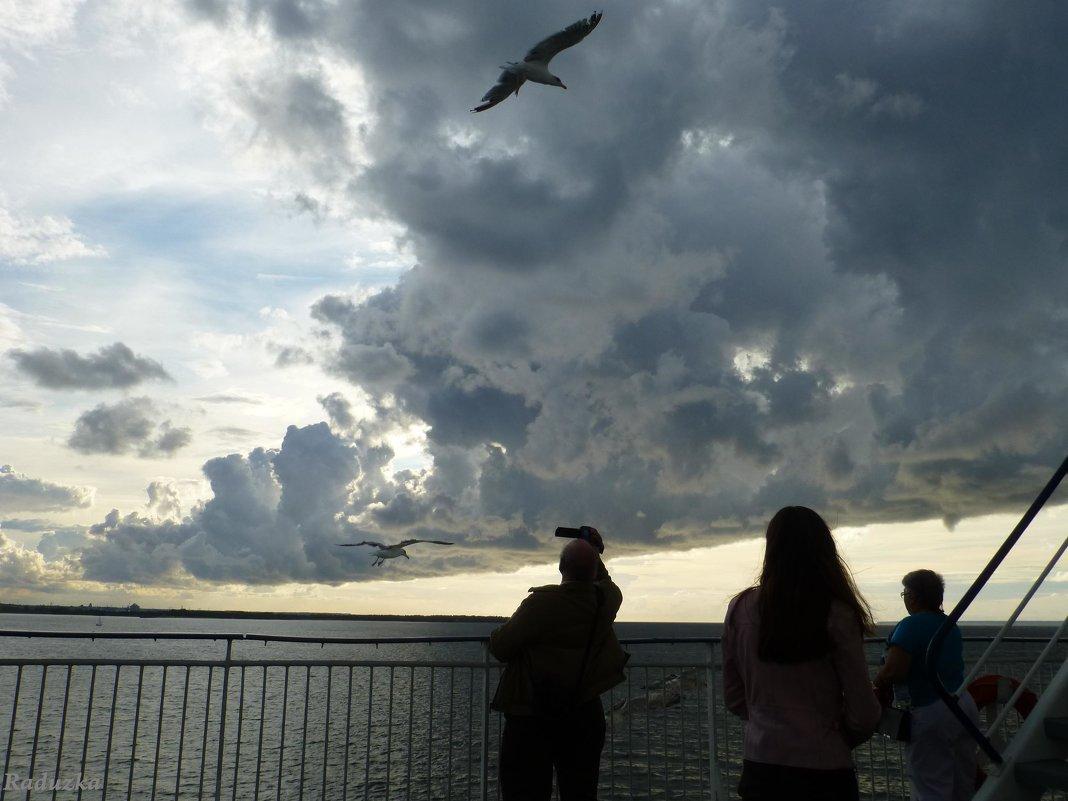 И чайки кружились над нами