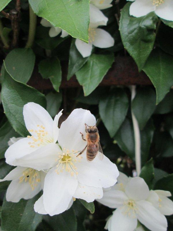 Пчелка 3 - Алексей Кузнецов
