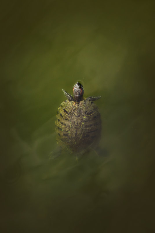 черепашка - Яна Спирина