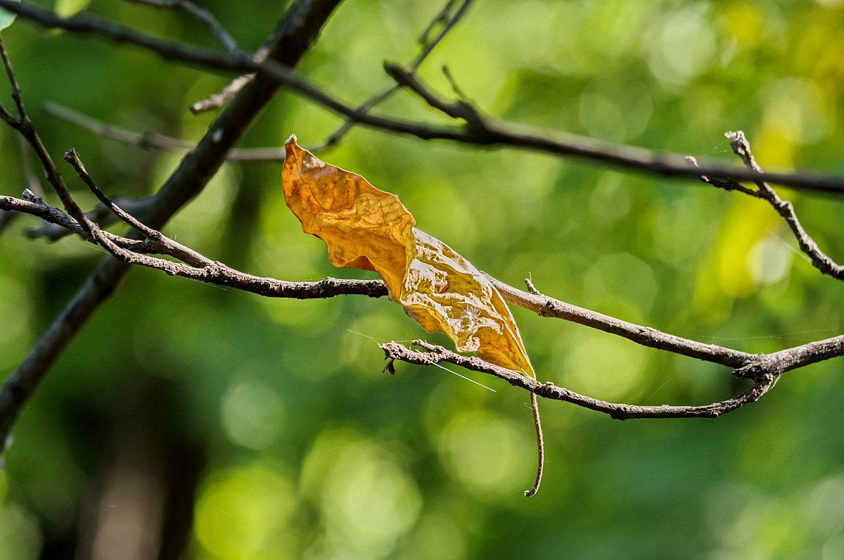 Осень где то рядом... - Николай Саржанов