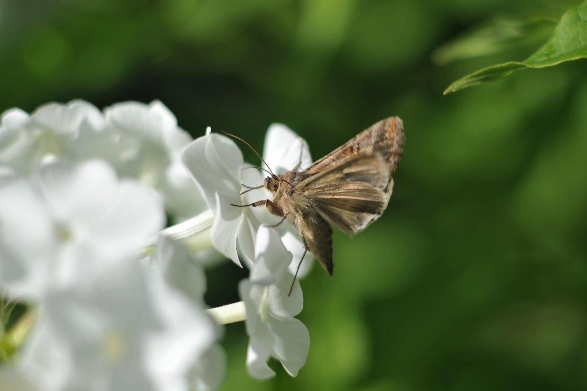 Butterfly - Андрей Вестмит