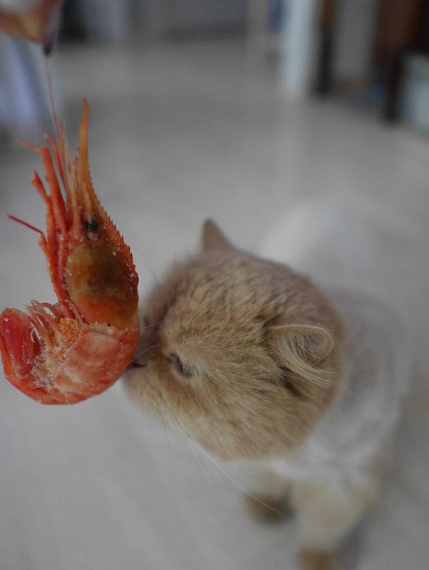 Знакомство с морепродуктами - Наталья Rosenwasser
