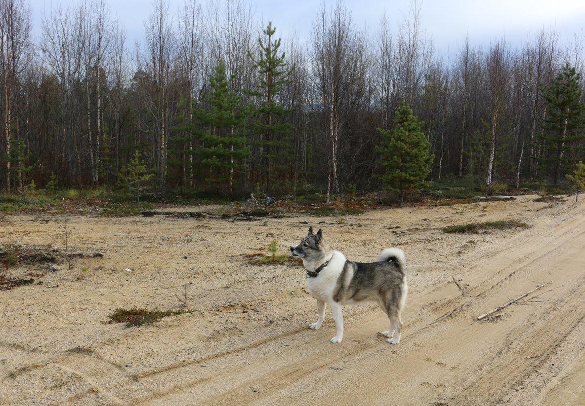 Прогулки по лесу - Ольга
