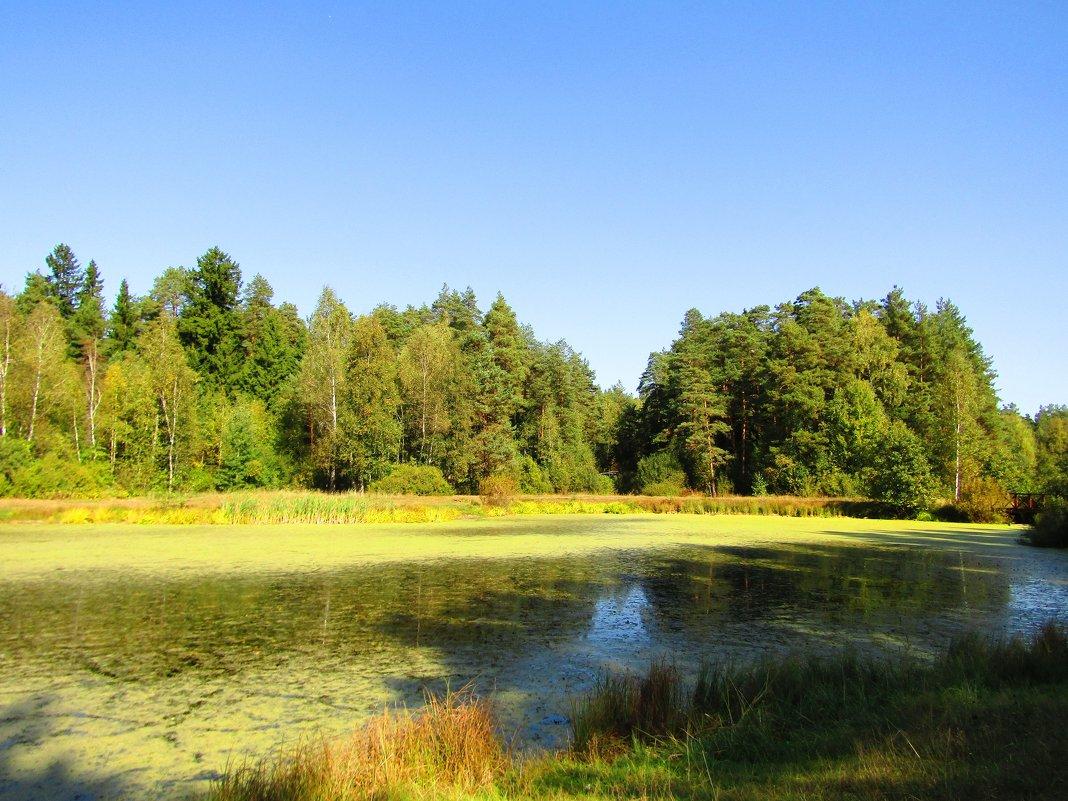 Тёплый день осени - Андрей Снегерёв