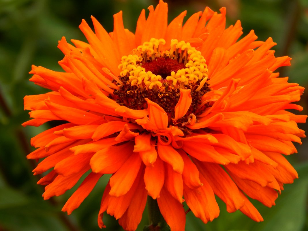 оранжевая - Alisa Koteva