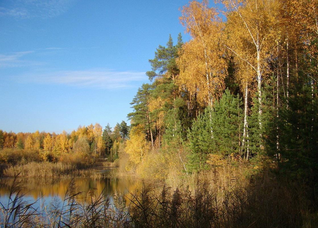 Октябрь в подмосковном лесу - Татьяна Георгиевна