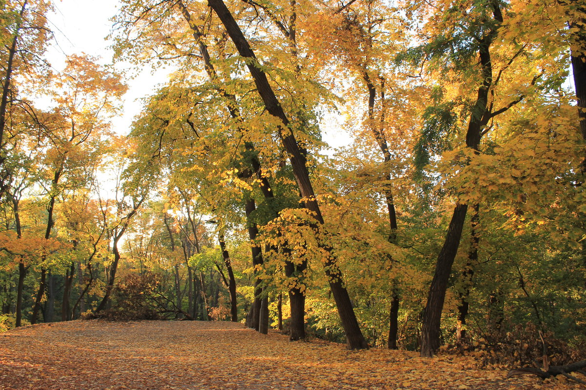 лес - tina kulikowa