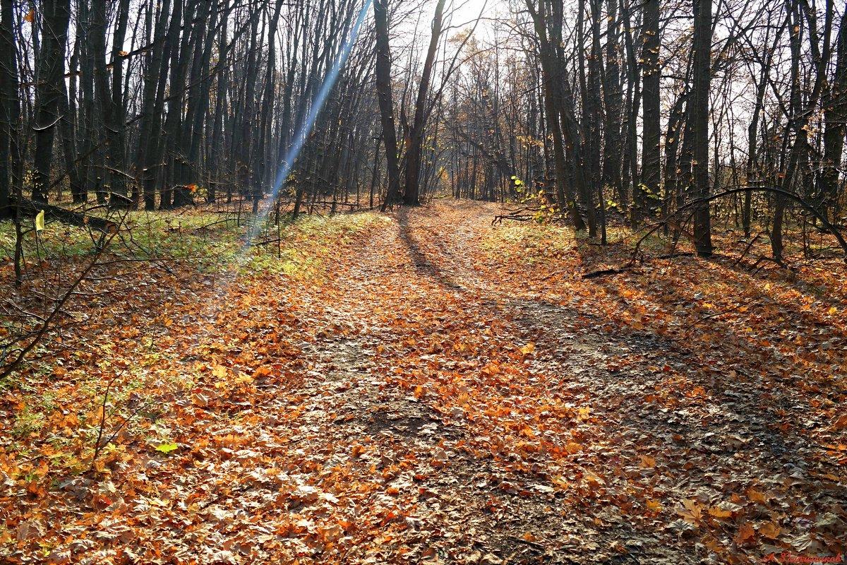 Свет октября.. - Андрей Заломленков