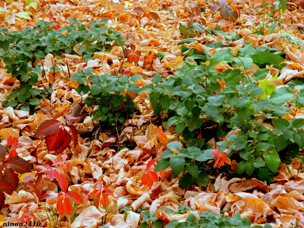 Октябрь в парке Октября - Нина Бутко