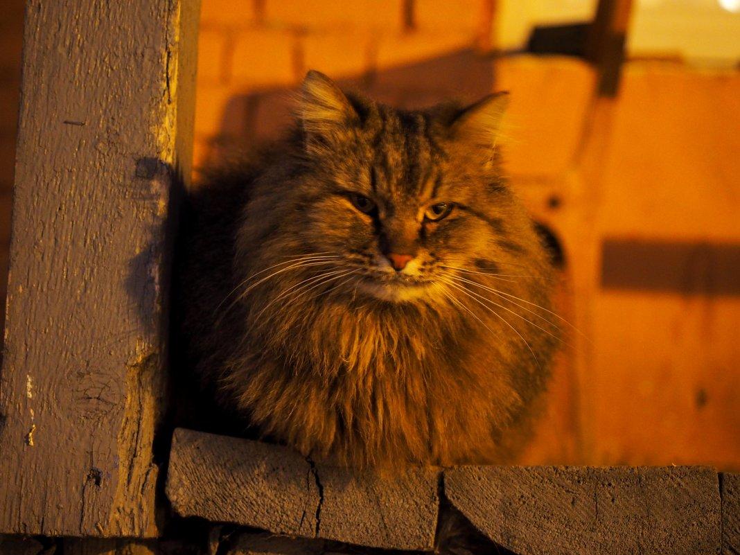 Служебный кот. - Ильсияр Шакирова
