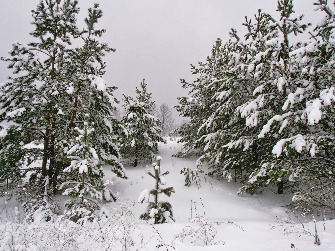 Мороз снежком укутывал... - Людмила И.