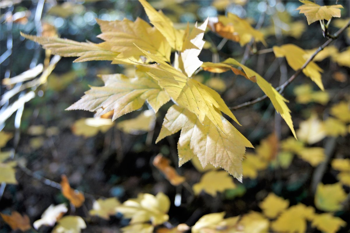Осенние листья дрожат на ветру - Виктория Попова