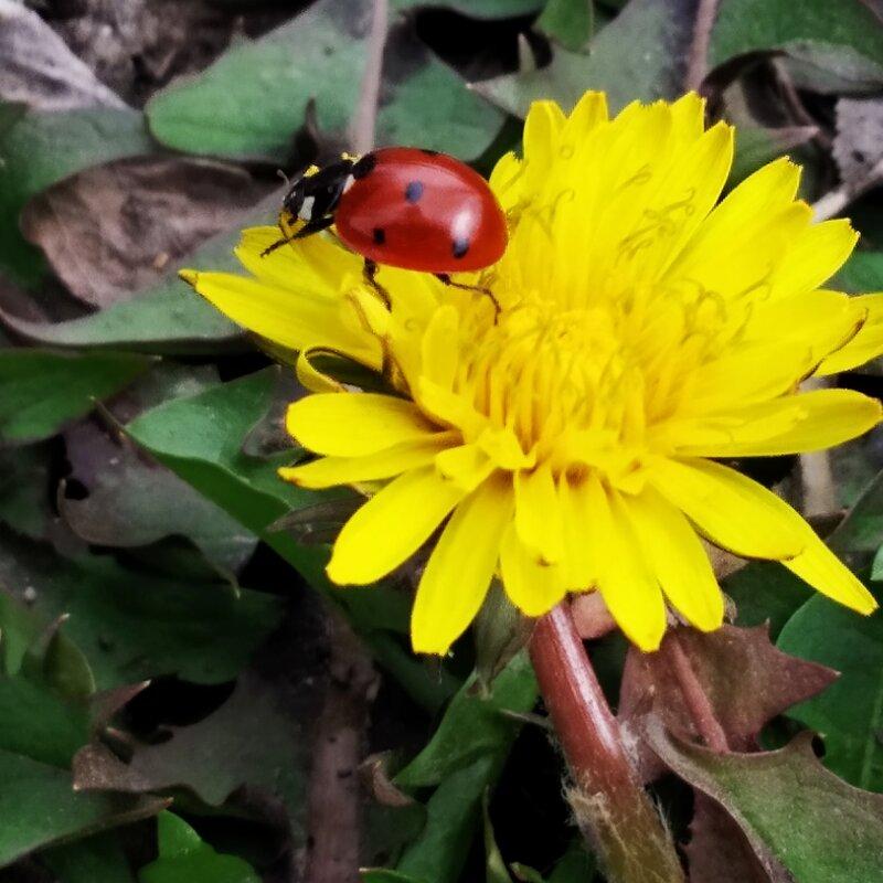 красное на желтом - Анара
