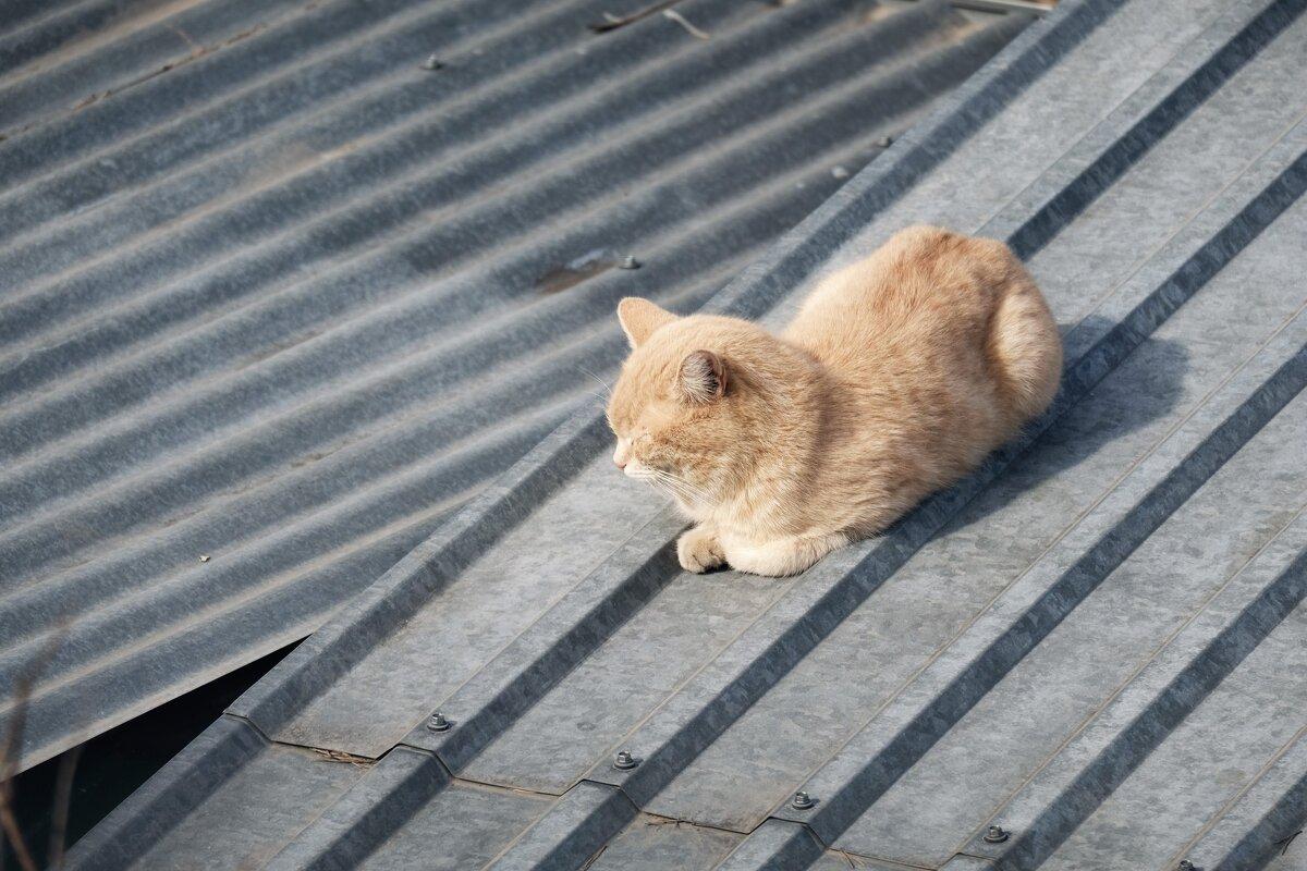 Дом на продажу, кота на улицу - Вадим