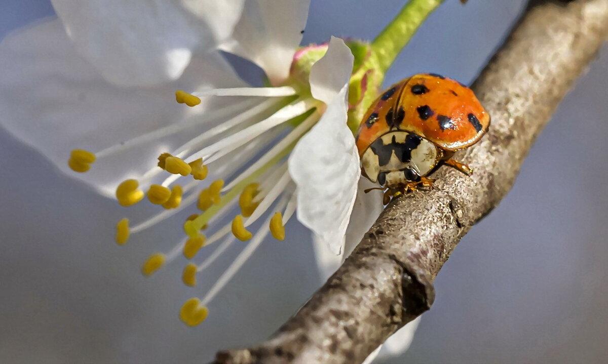 Пора цветения - Otist