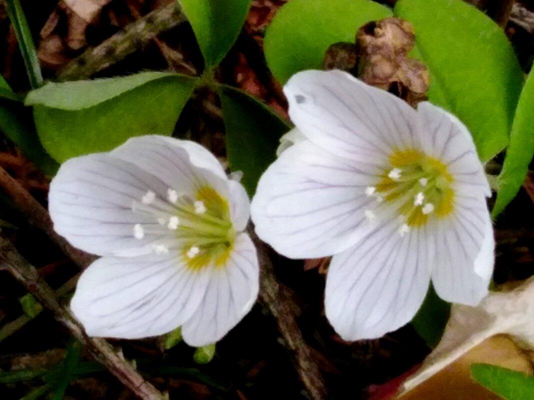 Лесные цветочки - Maryana Petrova