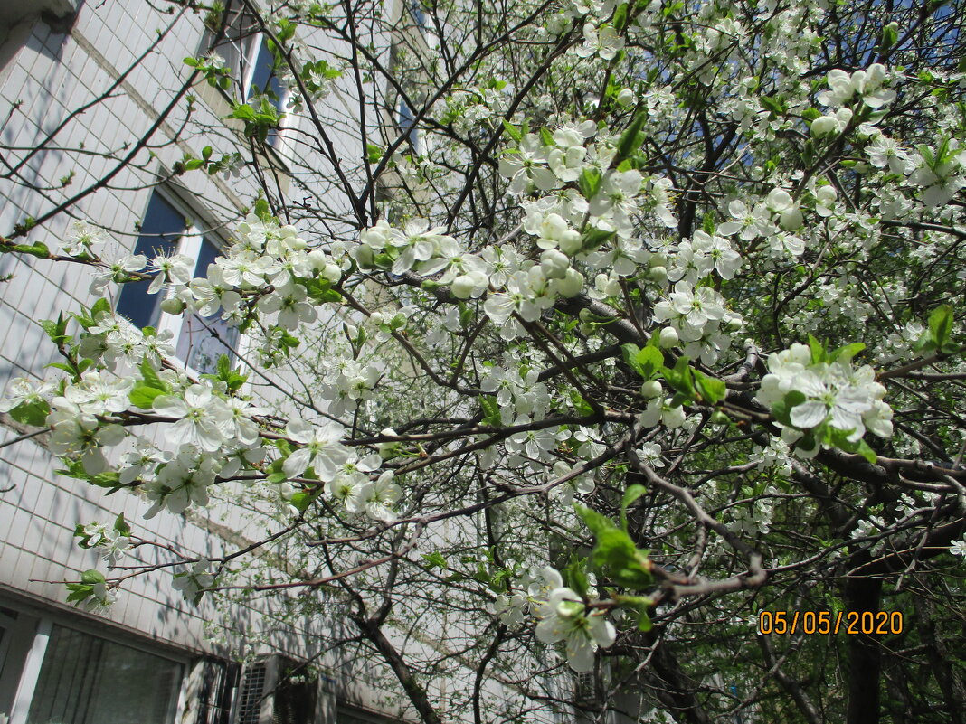 Весна.. - Зинаида