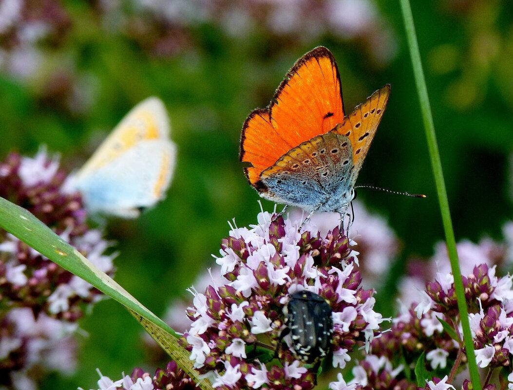 и опять про бабочек..18 - Александр Прокудин
