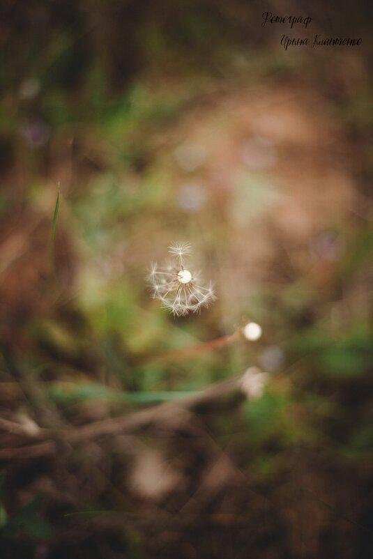 Сьемка природы - Ирина Клаптенко