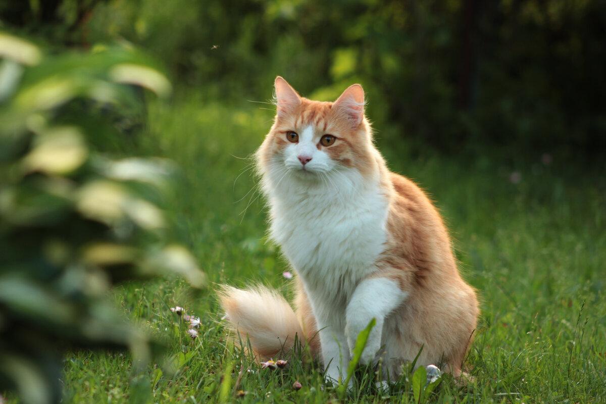 Кот на лужайке - Наталья Преснякова