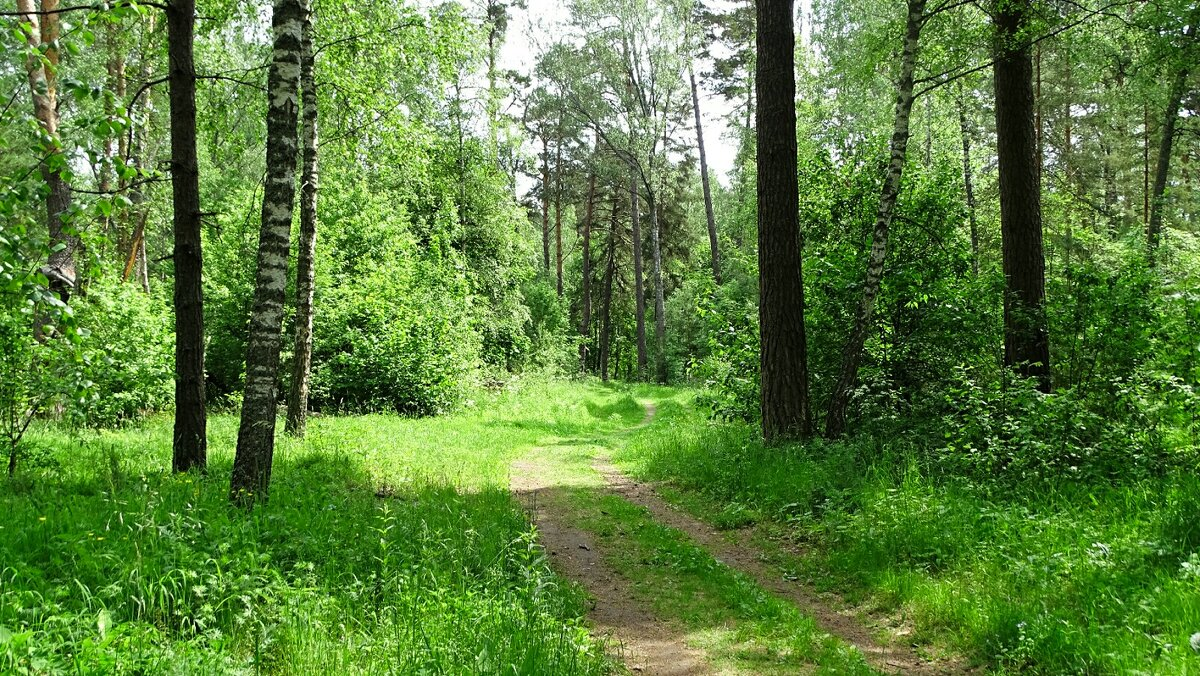 Июньский лес - Милешкин Владимир Алексеевич