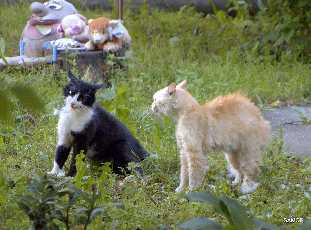 коты - Валерий Самородов
