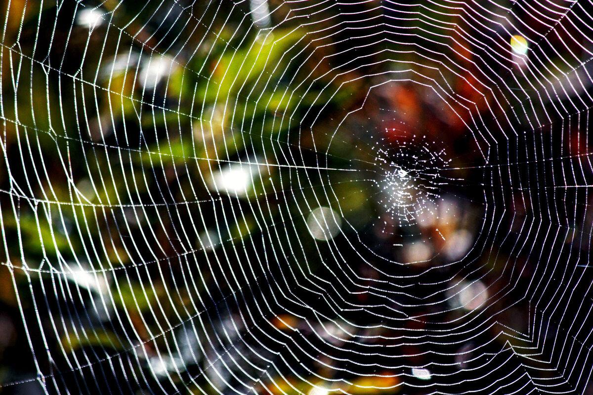 Не плетите новую жизнь из старой паутины… (с) - Ирина Румянцева